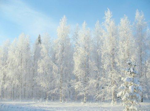 winter-2683845_1920(1).jpg